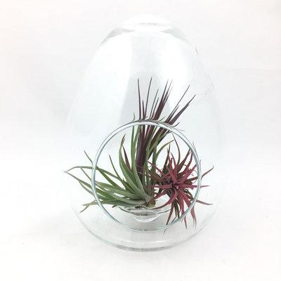 Glazen pot terrarium ei